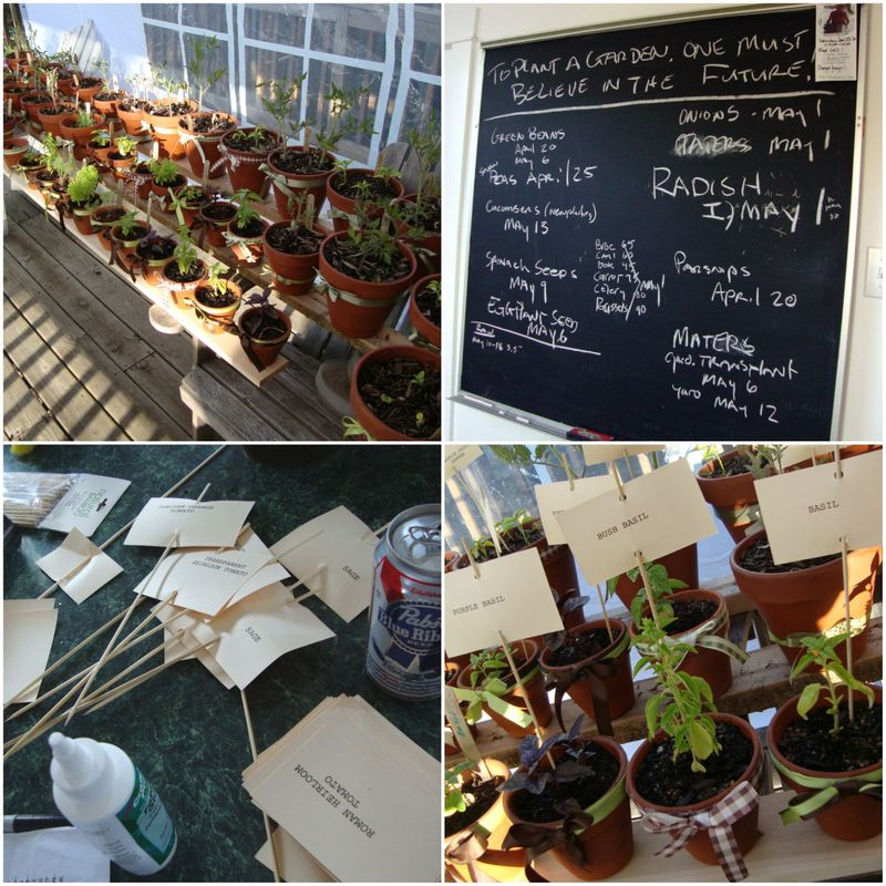 terracotta pots, centerpieces, garden, seedlings