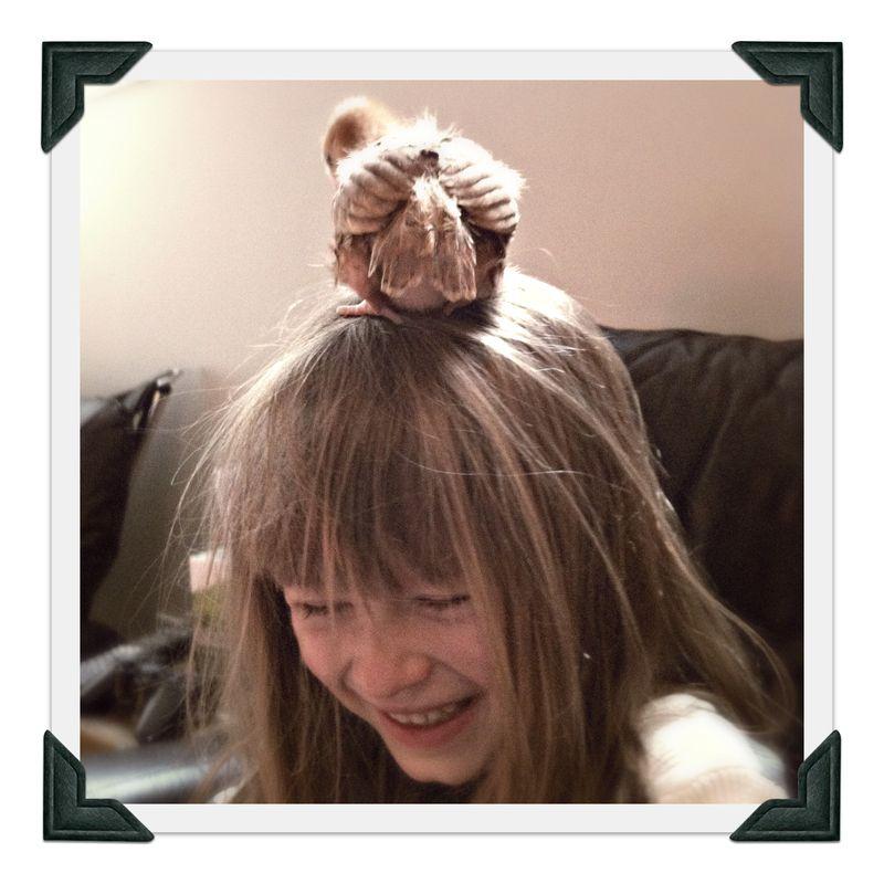 baby chicken sitting on someone's head