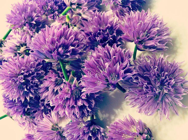 fresh chive flowers
