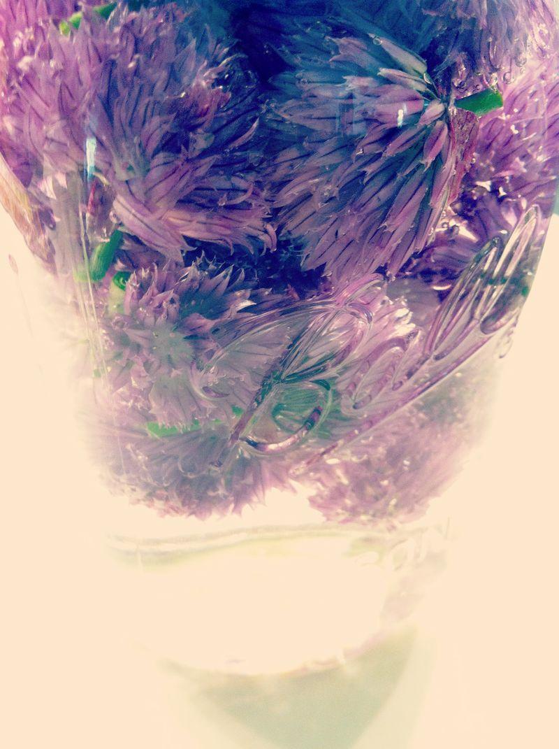 chive vinegar in ball mason jar
