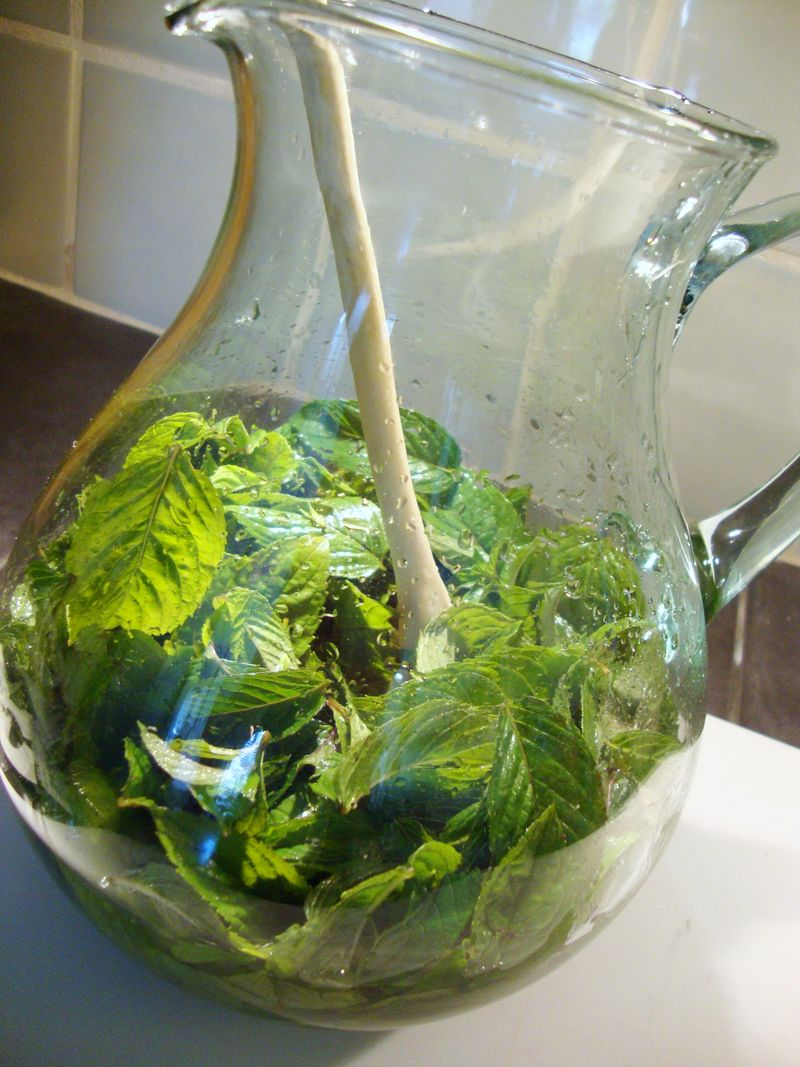 Fresh mint for homemade peppermint schnapps