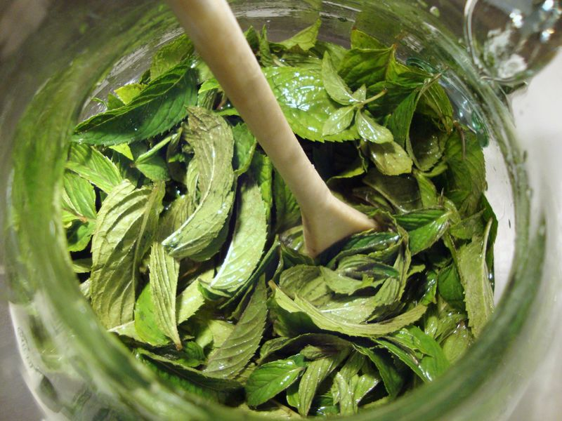 Fresh mint leaves for peppermint schnapps